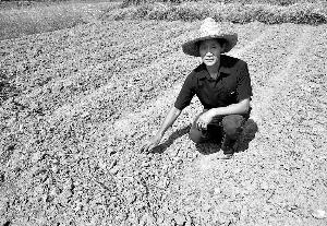 ⊙记者 时娜 ○编辑 朱绍勇-干旱或引发粮食减产预期 券商建议布局农业股图片